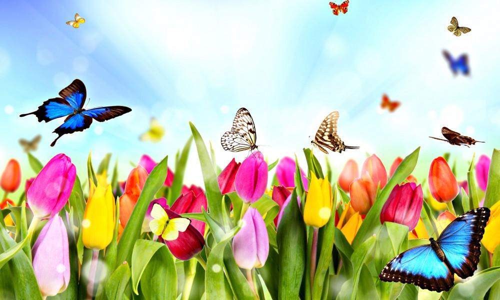 Rituel Equinoxe printemps