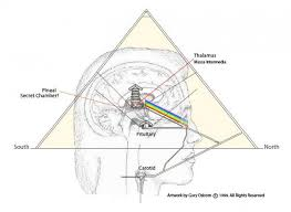 médium et glande pinéale