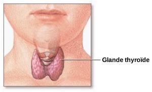 Thyroïde symbolisme
