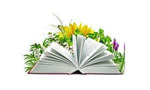 Herbes et plantes magiques – récolte de la Saint Jean