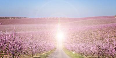 signification rêve lumière rose bleue mère et frère