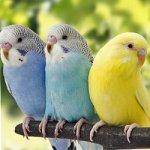Famille harmonie Magie Blanche