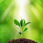 Plantes Fertilité