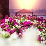 Plantes paix sérénité