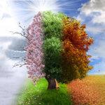 Magie verte Arbres arbustes
