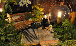 magie verte stock plantes consacrées