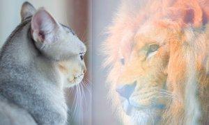 chat animal totem